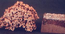 Traitement du bois vrillettes