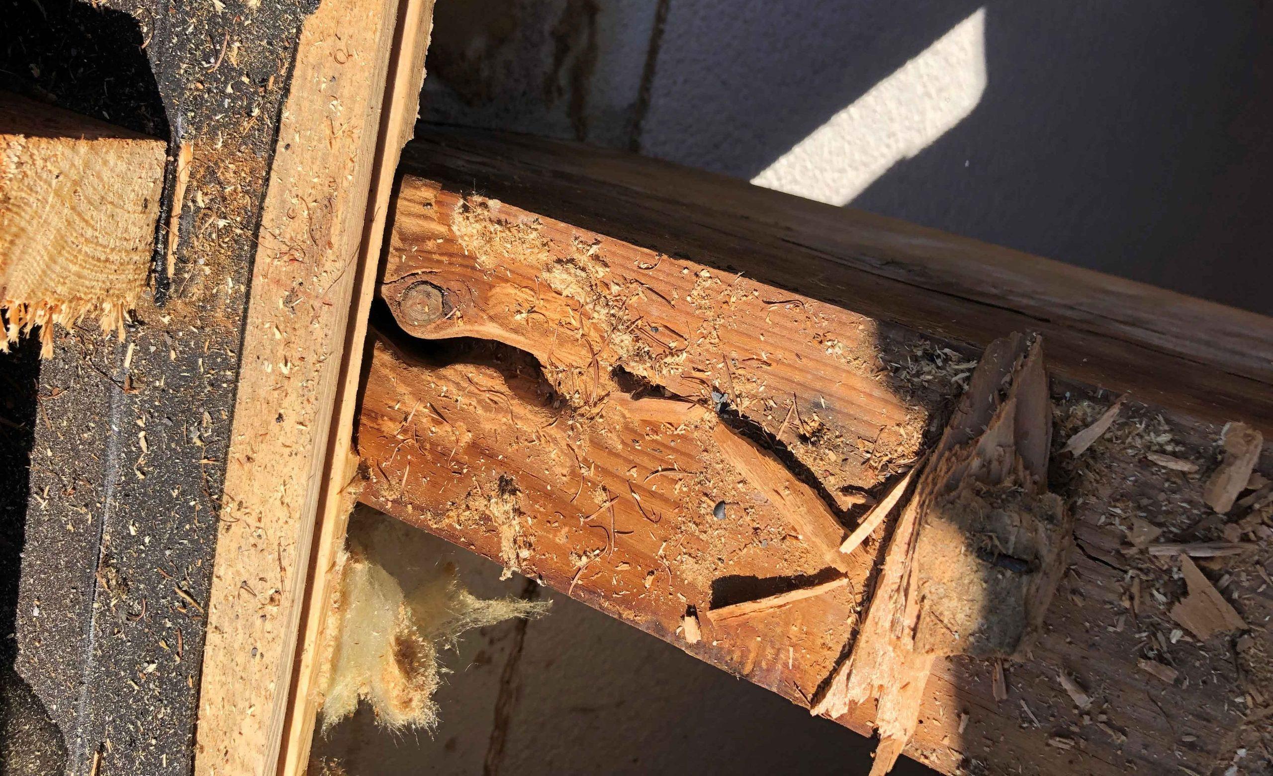 Service de traitement du bois par Prosablage
